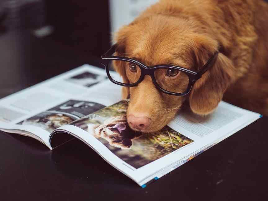 How smart are dogs