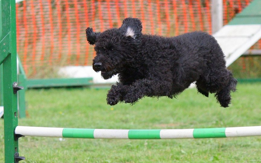 best sport for small dog