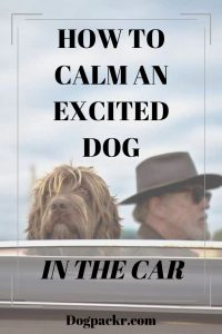 How to calm an excited dog in the car