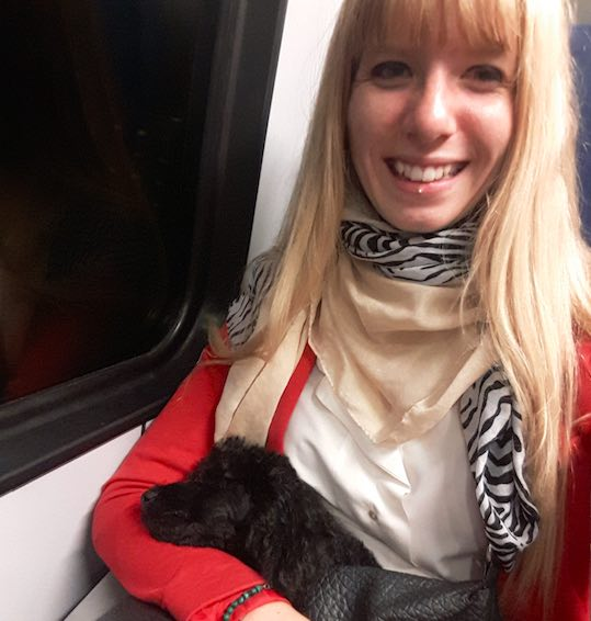 How to travel with a dog without a car