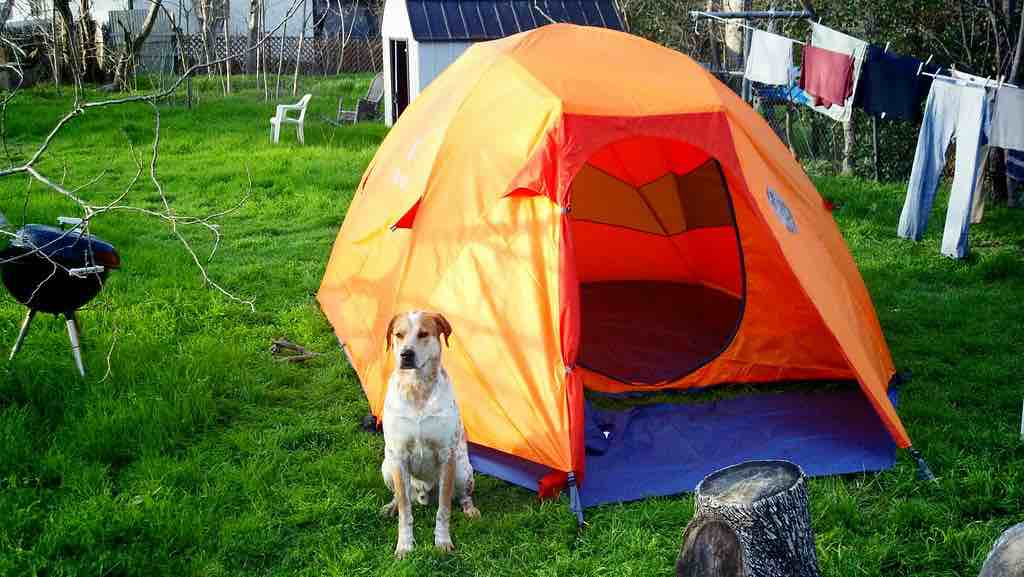 Is leaving a dog in a tent while camping possible?