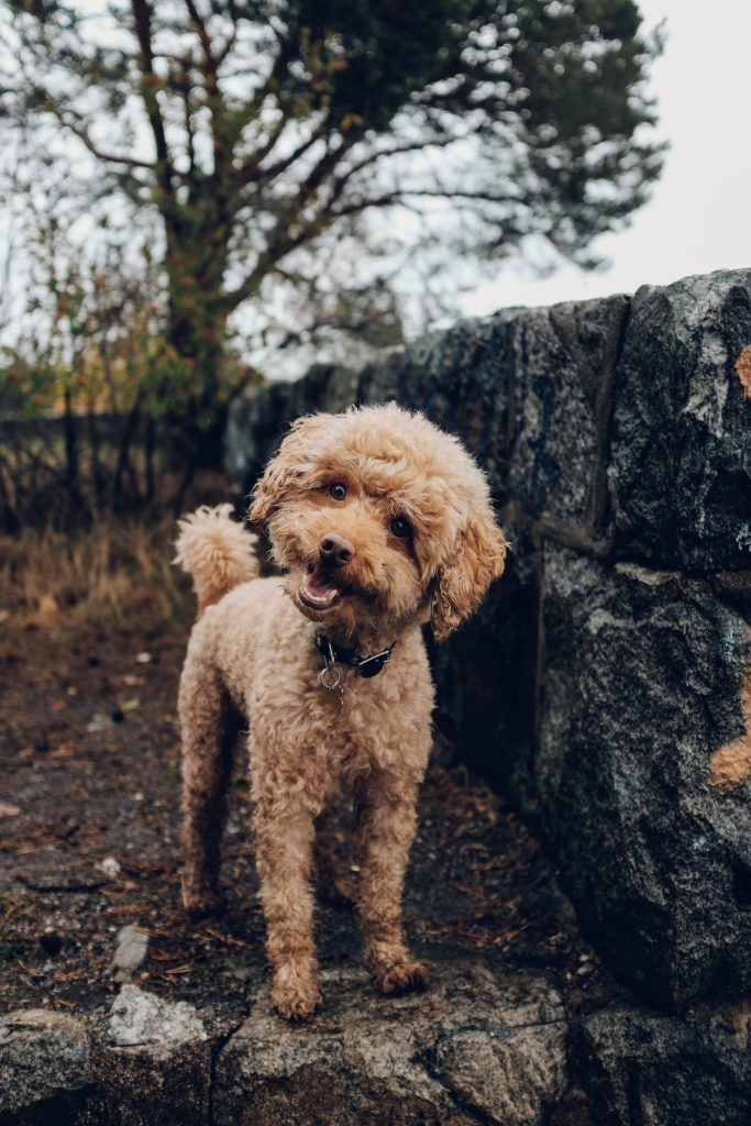 Complete guide to hiking with small dogs