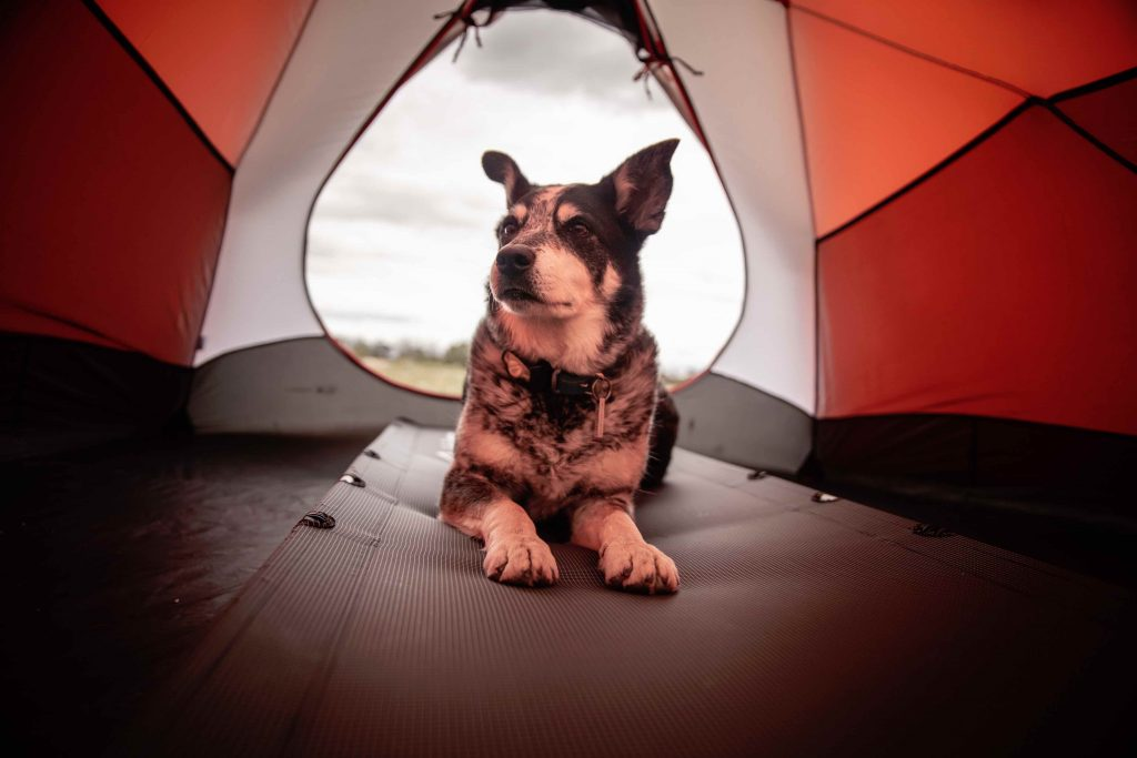 taking dogs camping for the first time