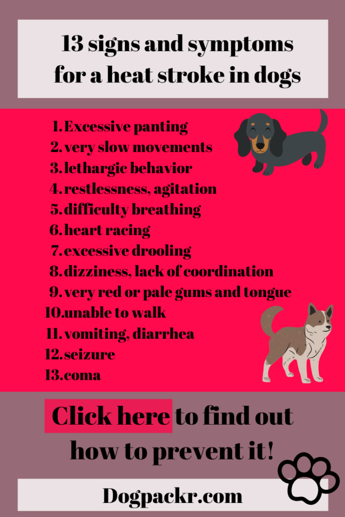 signs and symptoms of a heat stroke in dogs