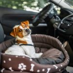 How to cure dog car anxiety – help your dog to enjoy rides