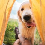 How to go camping with a dog and have the best time ever