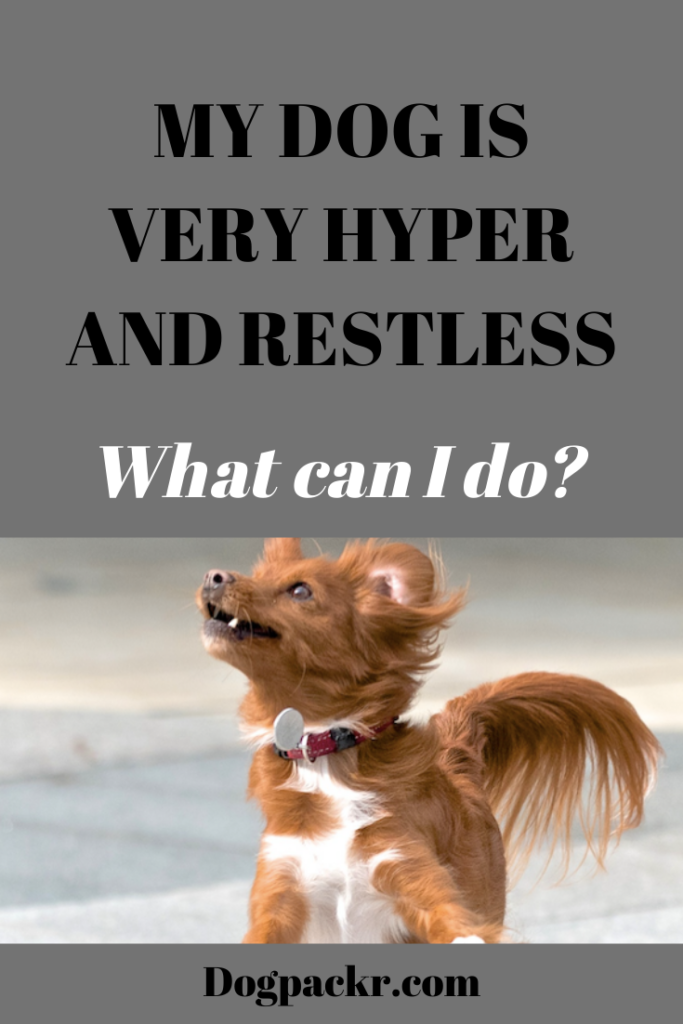 My Dog Is Very Hyper And Restless What Can I Do Dogpackr,What A Beautiful Name Guitar Chords G