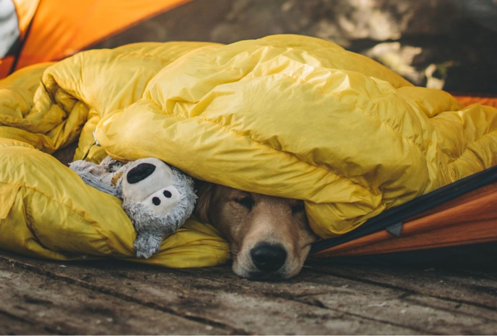 camping with a dog where does he sleep
