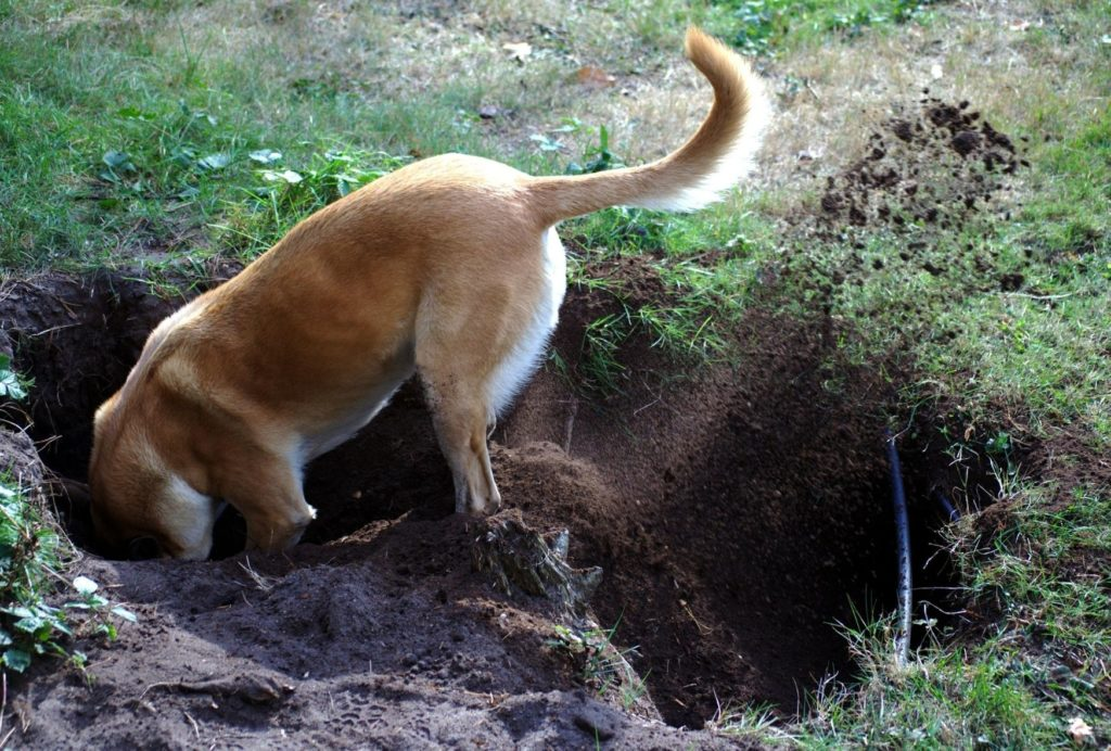 How to stop your dog from digging under a fence
