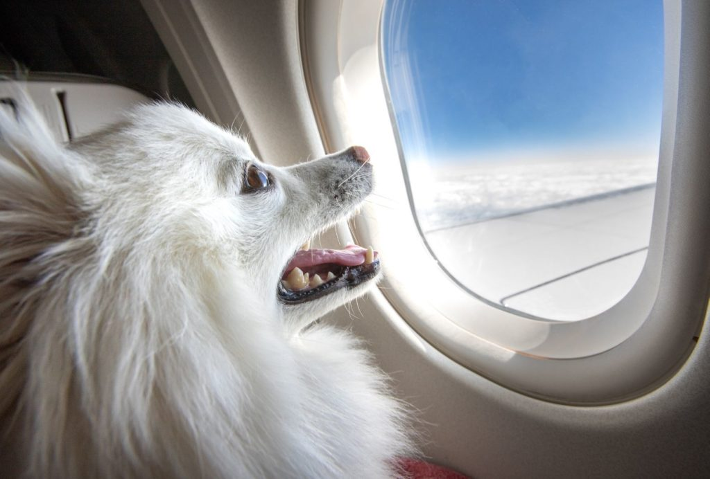 is it safe for dogs to fly in cabin