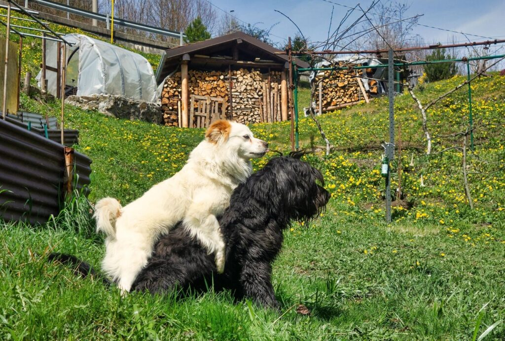 Dogs like to hump different subjects: humans, objects and of course, other dogs