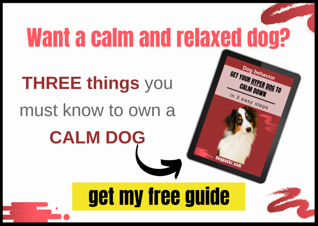 My Dog Is Hyperactive All The Time 8 Things You Can Do Dogpackr,What A Beautiful Name Guitar Chords G