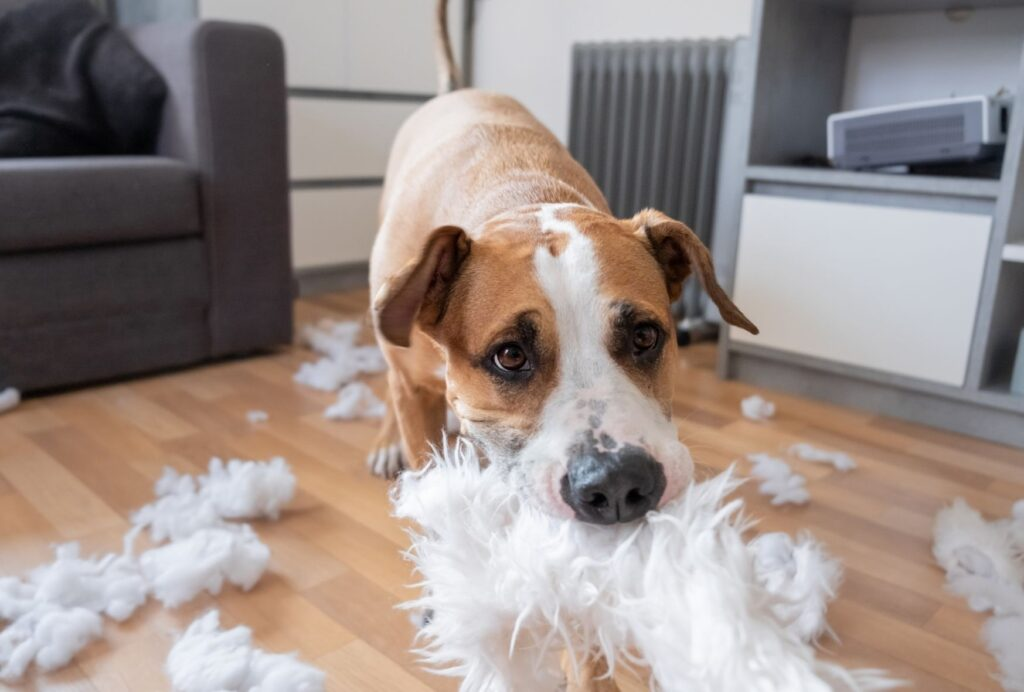 how to stop a dog from chewing on things