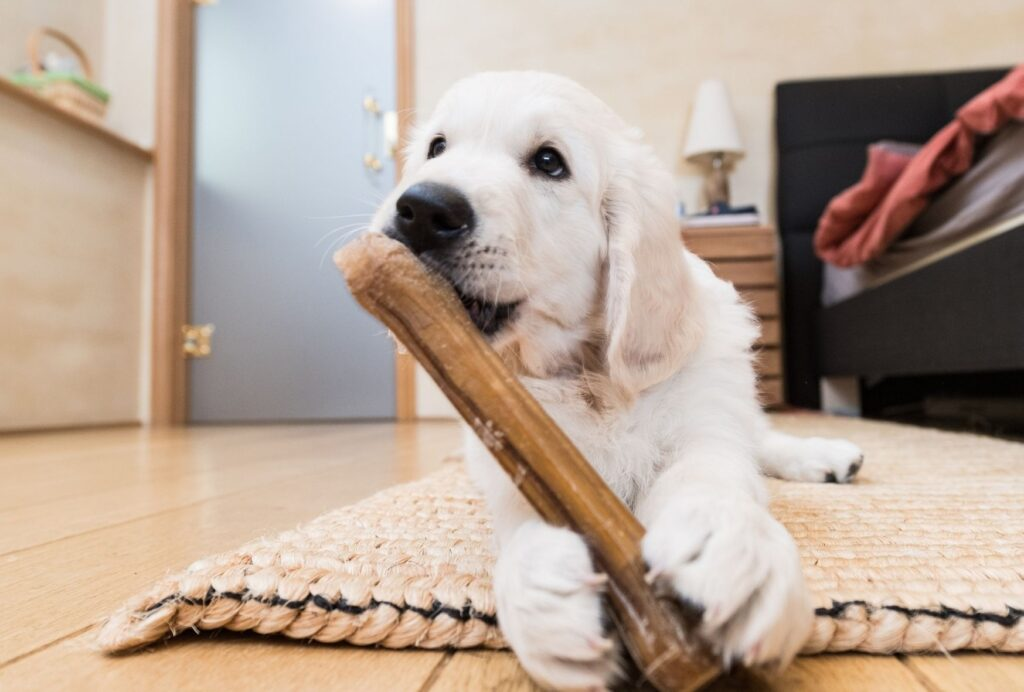 If your puppy is teething, make sure he gets enough things which he's allowed to chew