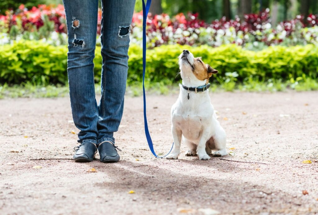 Teaching your dog his name is an essential part in dog training