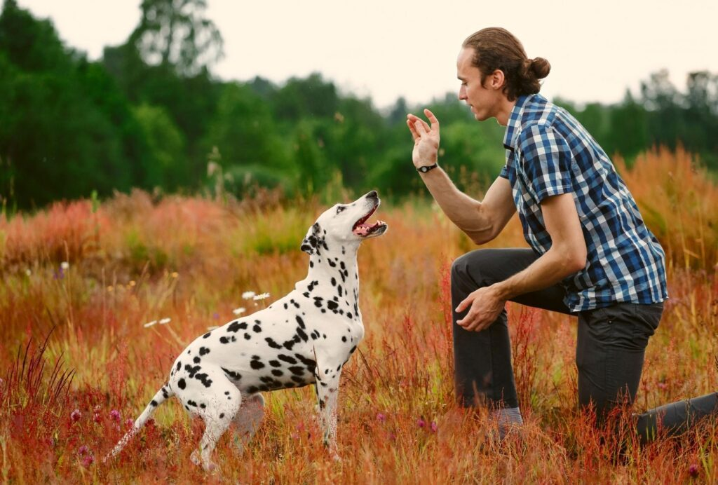 Training your dog at home will strengthen the bond between you and your dog