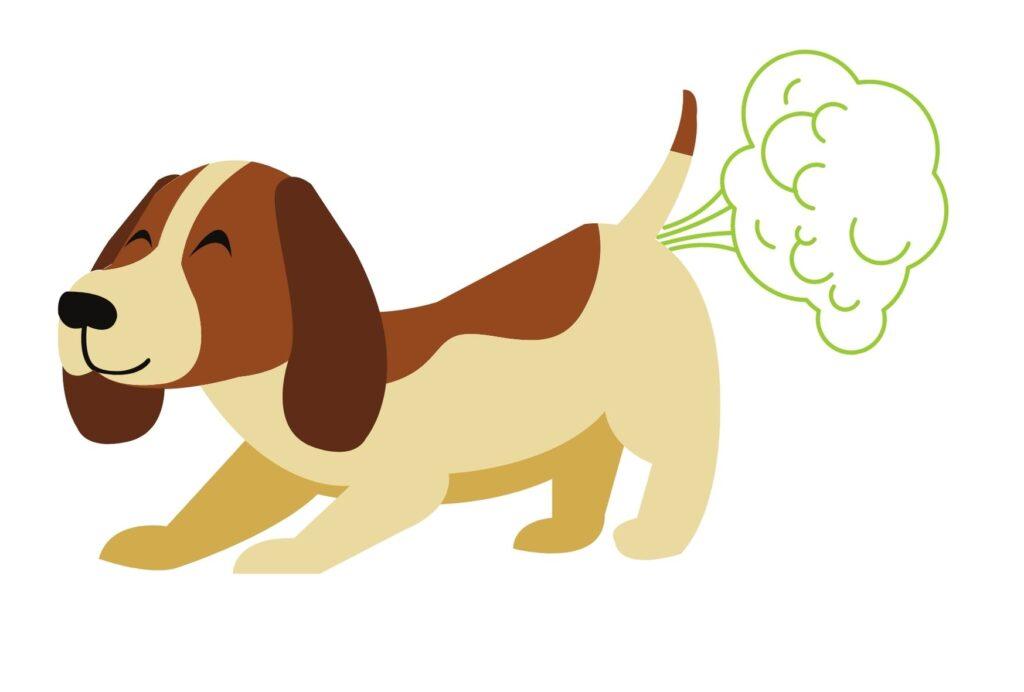 Dog farts smell so bad!