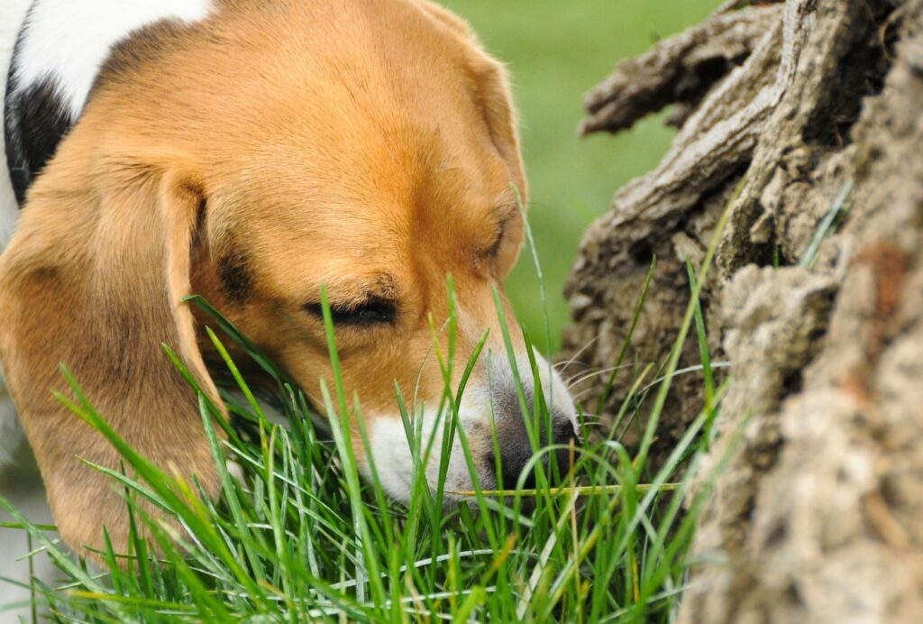 Eating grass can help your dog's grumbling stomach to feel better