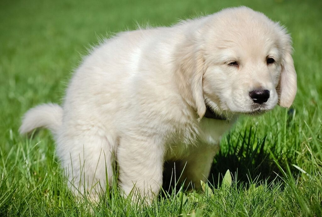 Make nighttime potty breaks short and boring to help your puppy go back to sleep immediately