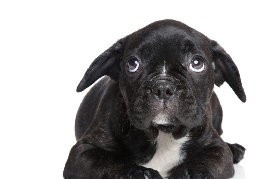 how to calm a stressed dog naturally