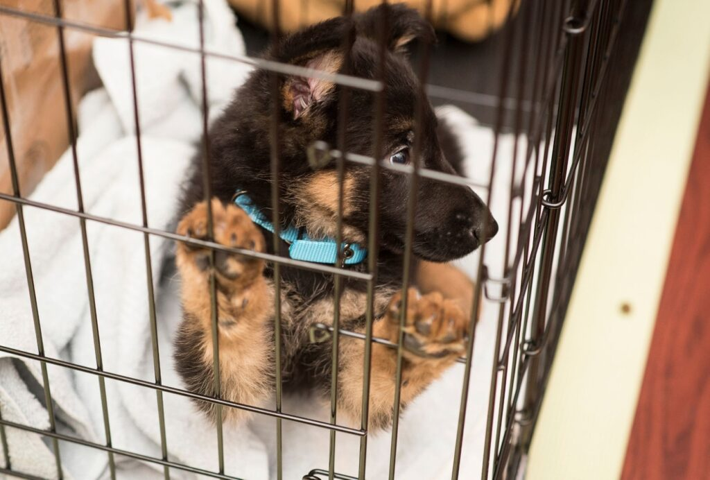 crate training schedule for a puppy