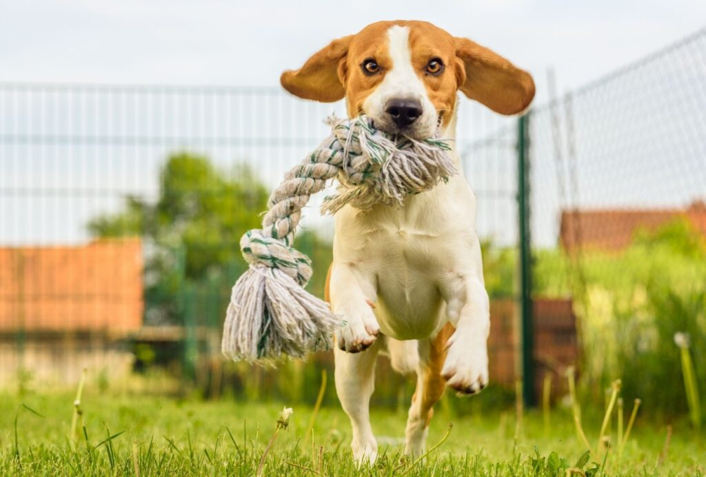 You can even combine mental and physical stimulation by playing fetch or letting your dog find his toys