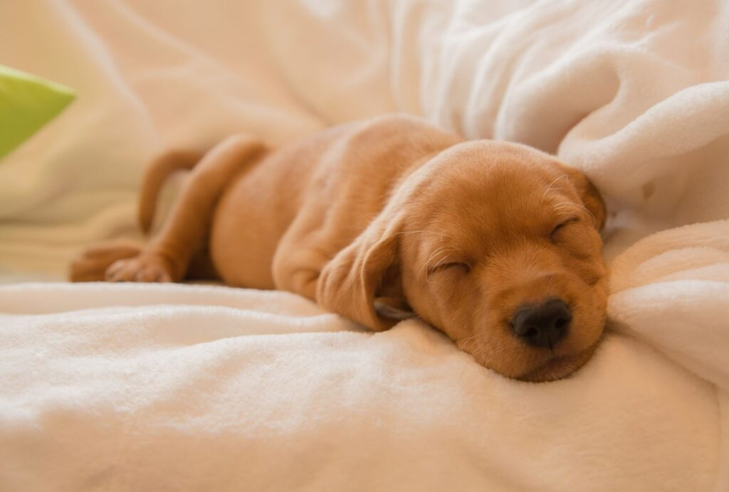 If your puppy is sleeping all day, that's completely fine and normal!