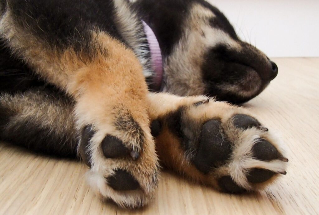 If your puppy seems to be sleeping all day, that's perfectly normal and you're lucky to have a natural snoozer!