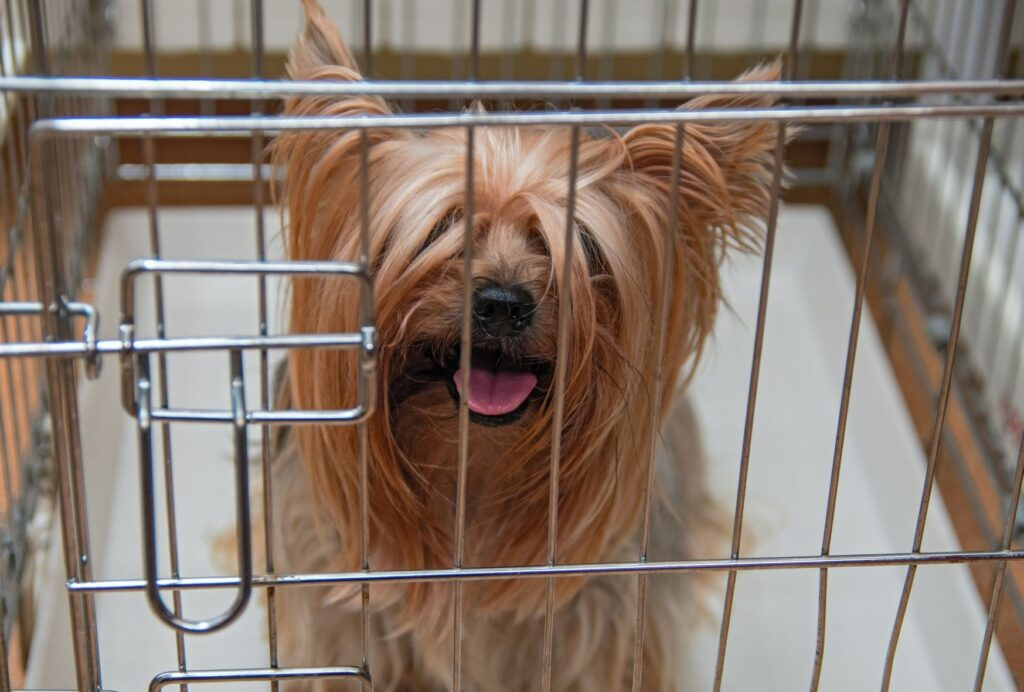 """Don't forget to desensitize your """"leaving cues"""" when your dog is in the crate"""