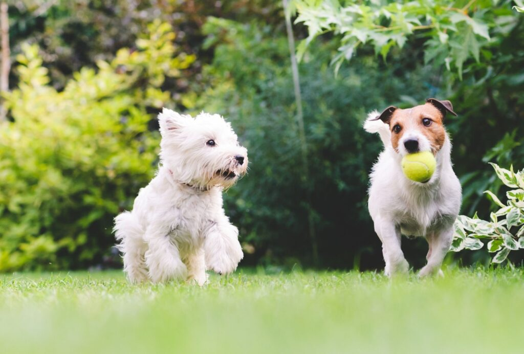 Having a playdate is super fun for you and your dog