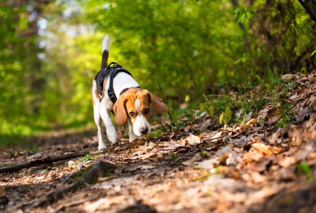 Letting your dog sniff on walks will take his happiness to a new level!