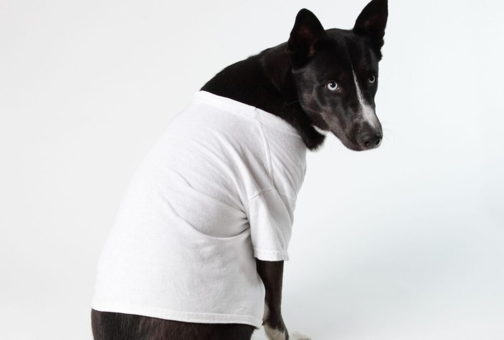One quick fix to stop your dog from chewing himself is to let him wear a t-shirt