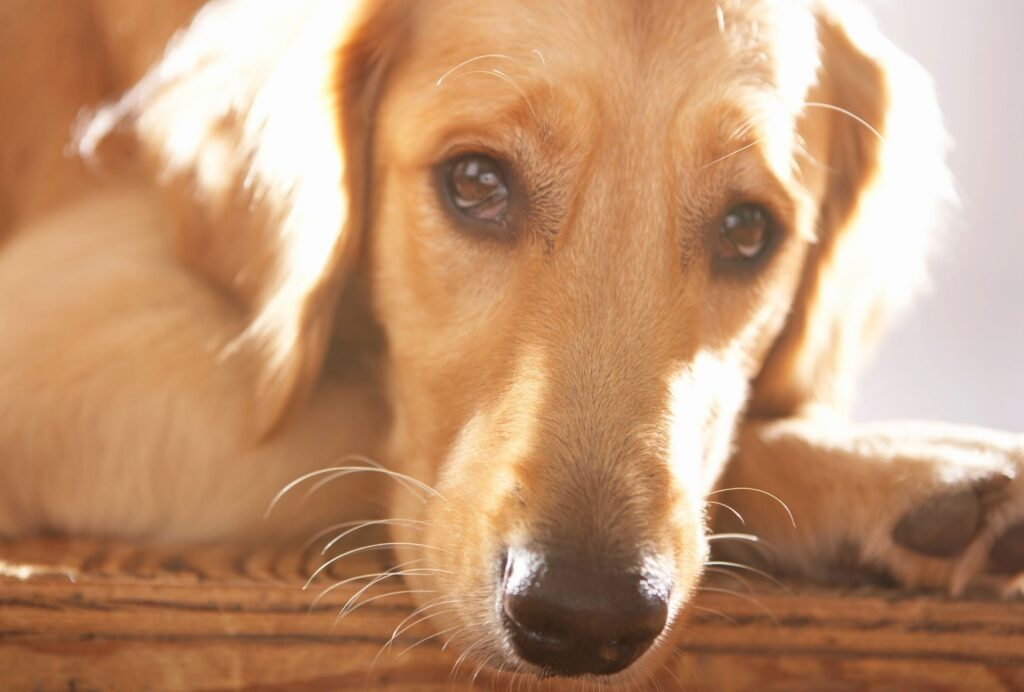If your dog gets super stressed as soon as you want to leave the house, he's probably suffering from separation anxiety