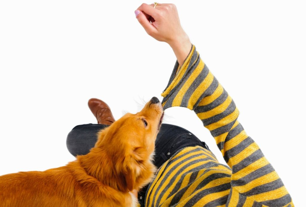 Biting your sleeves is like playing tug of war for your dog, especially if you're pulling back
