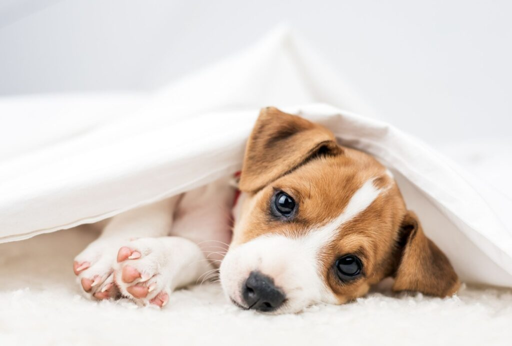 Having a clear bedtime routine makes it much easier for your puppy to calm down for bed