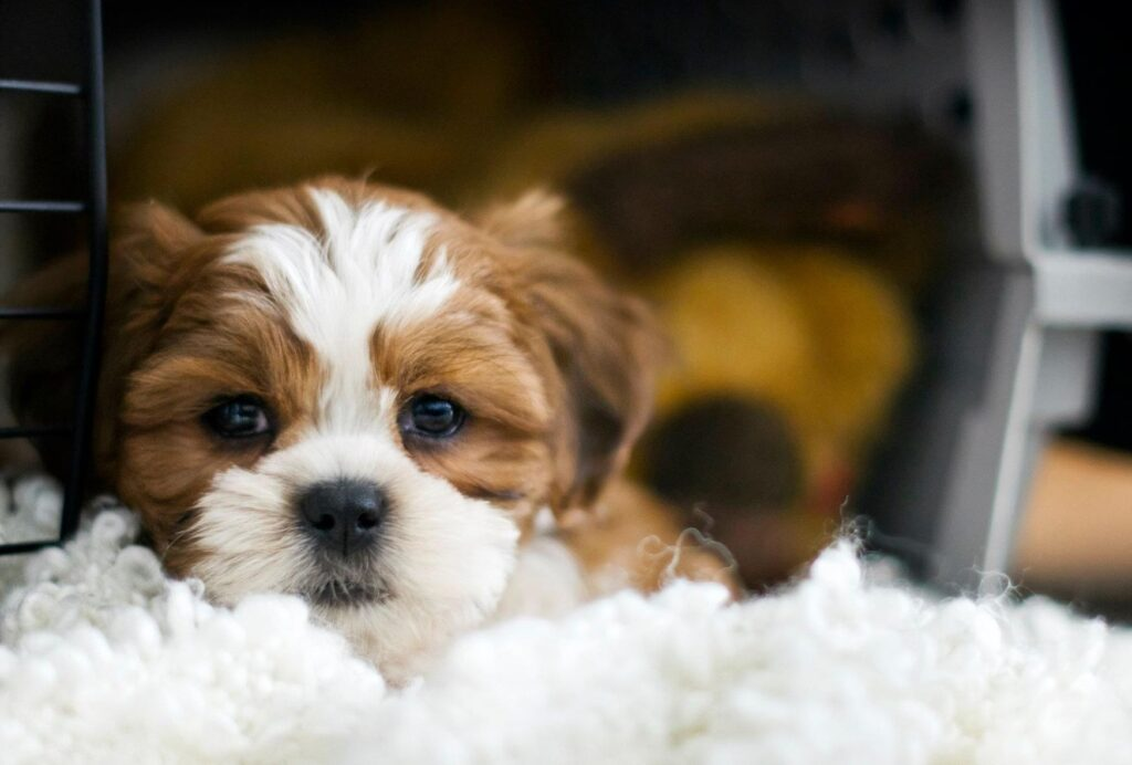 Young puppies can't hold their bladder for very long and need to be taken out regularly
