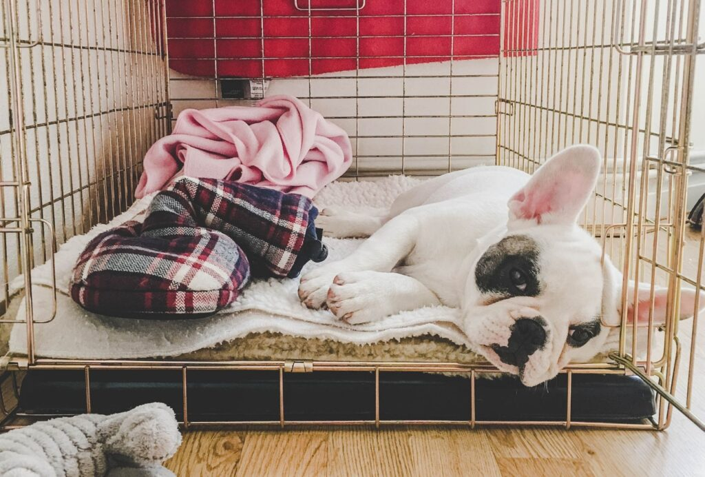 how to stop a puppy from peeing in the crate
