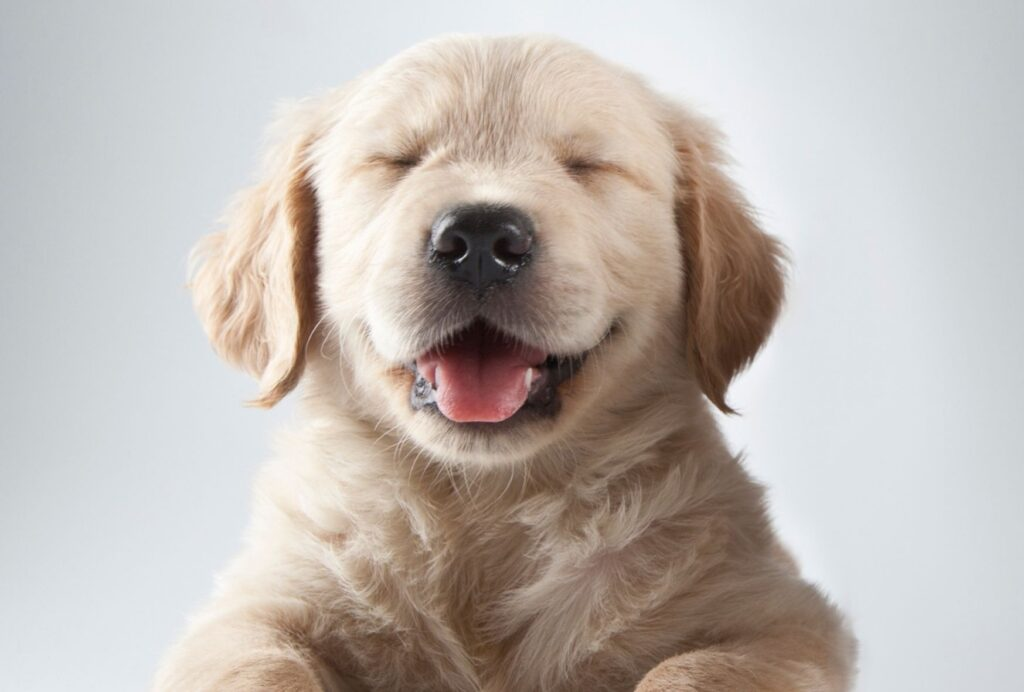 Taking your puppy out regularly will help prevent accidents inside the crate