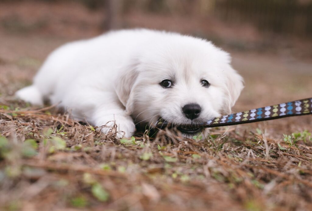 Puppy tantrums often happen on a leash when your puppy is getting overstimulated