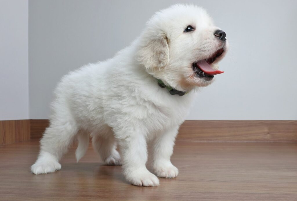 If you're staying calm, it's much easier for your puppy to calm down as well