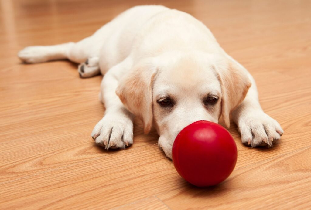 Toys also provide stimulation. So, if your puppy is overtired, take them away so he can settle down
