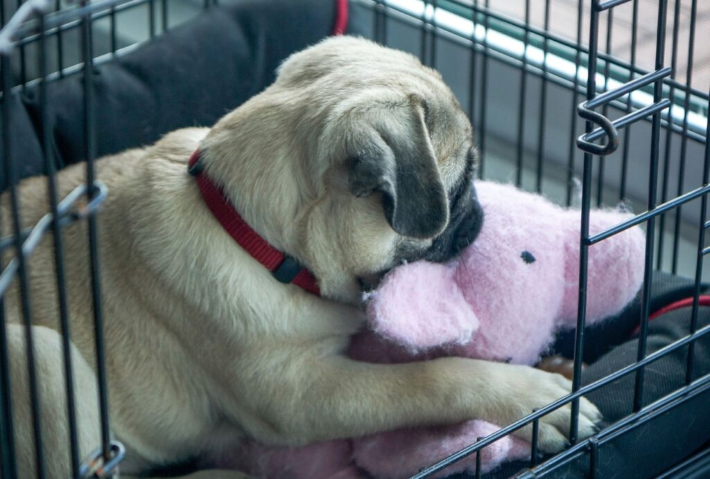 One reason for puppy tantrums is that your puppy is scared