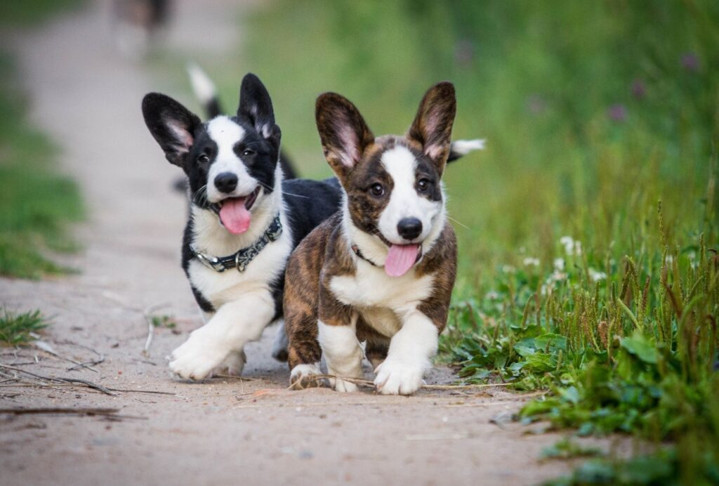 When do puppies calm down