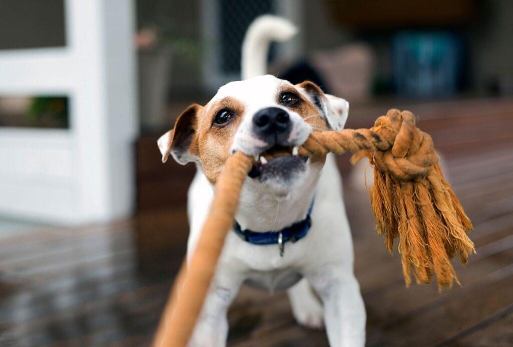 Ignoring hyper behavior is one of the best ways to help a hyper puppy calm down