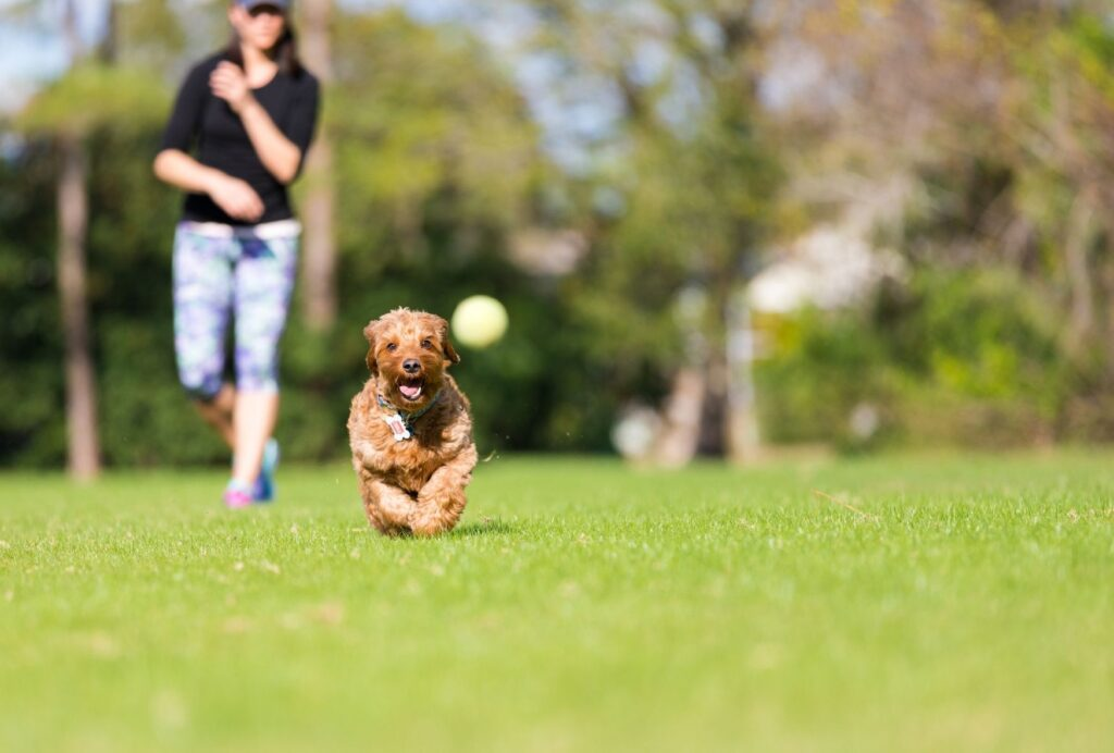 Playing a round of fetch before a walk is a great way to get rid of some of that excess energy