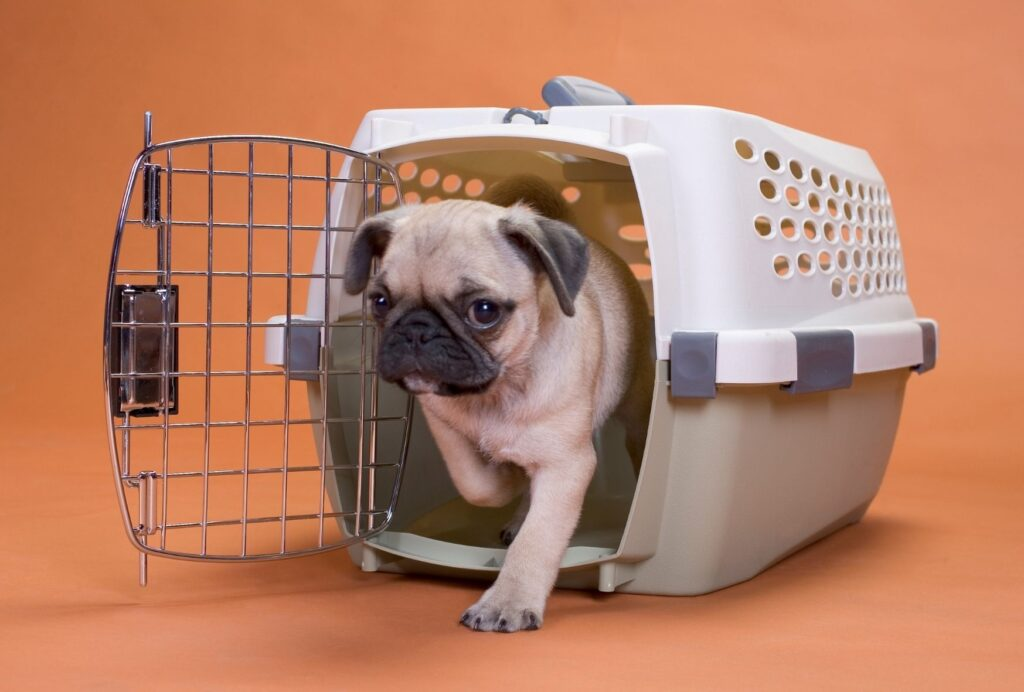 Never force your dog into the crate! That will inevitably get him to hate it.