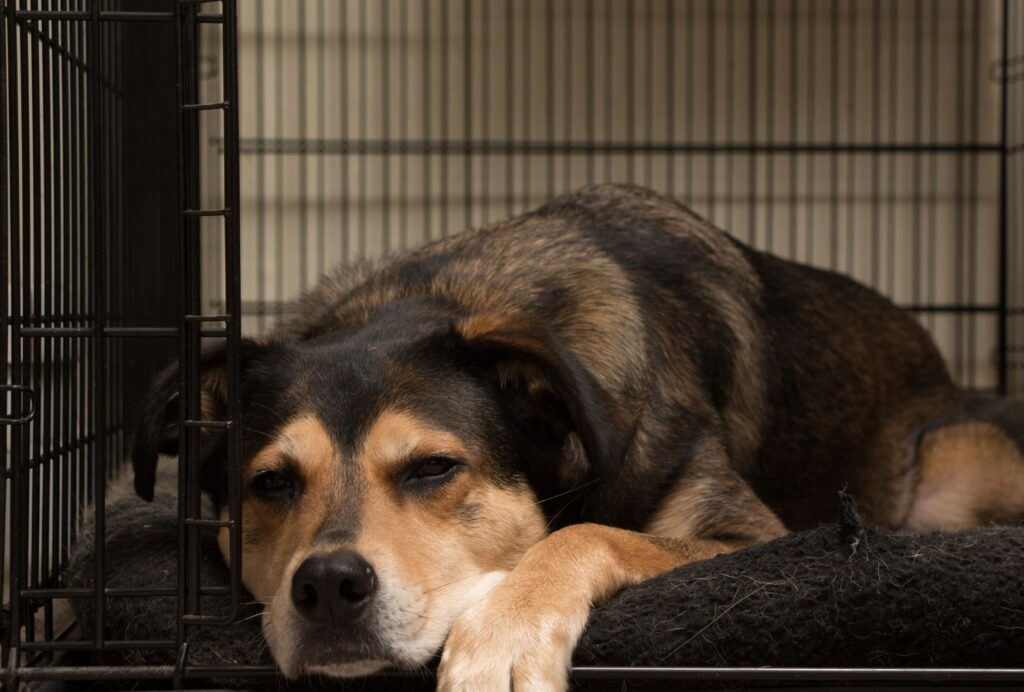 Make your dog's crate look like a den. You can try covering it to make it even more den-like