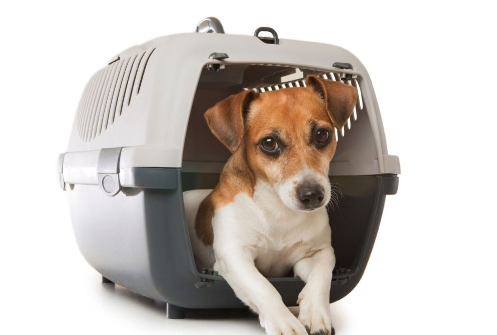 If your dog hates his crate, it might be that he wasn't properly crate trained
