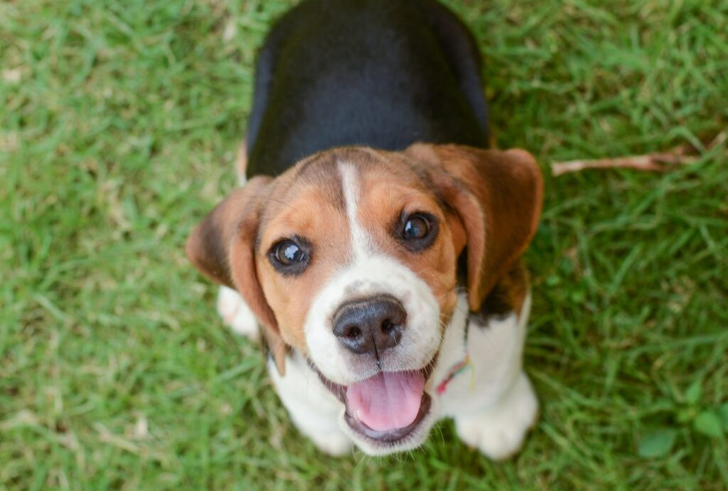 Giving your puppy too much attention can actually also make them overtired