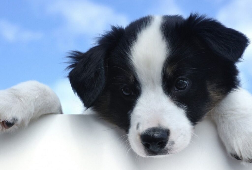 Overtired puppies often seem to forget any kind of manners you ever taught them